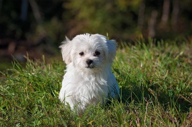 Hundeloven: Hvordan skal jeg forholde mig, hvis naboens hund bider mig?