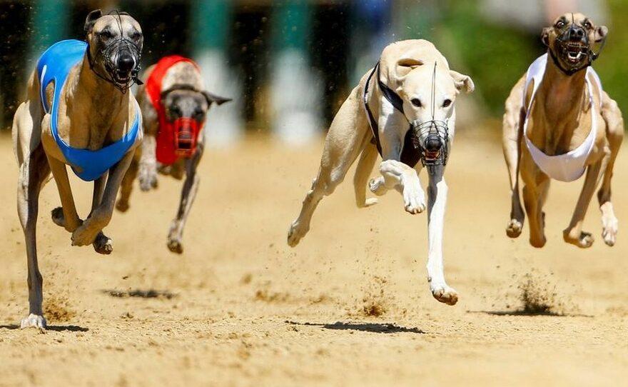 Begynderguide til hundevæddeløb