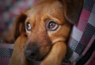 Hvad er den bedste diæt for hunde i kræftbehandling