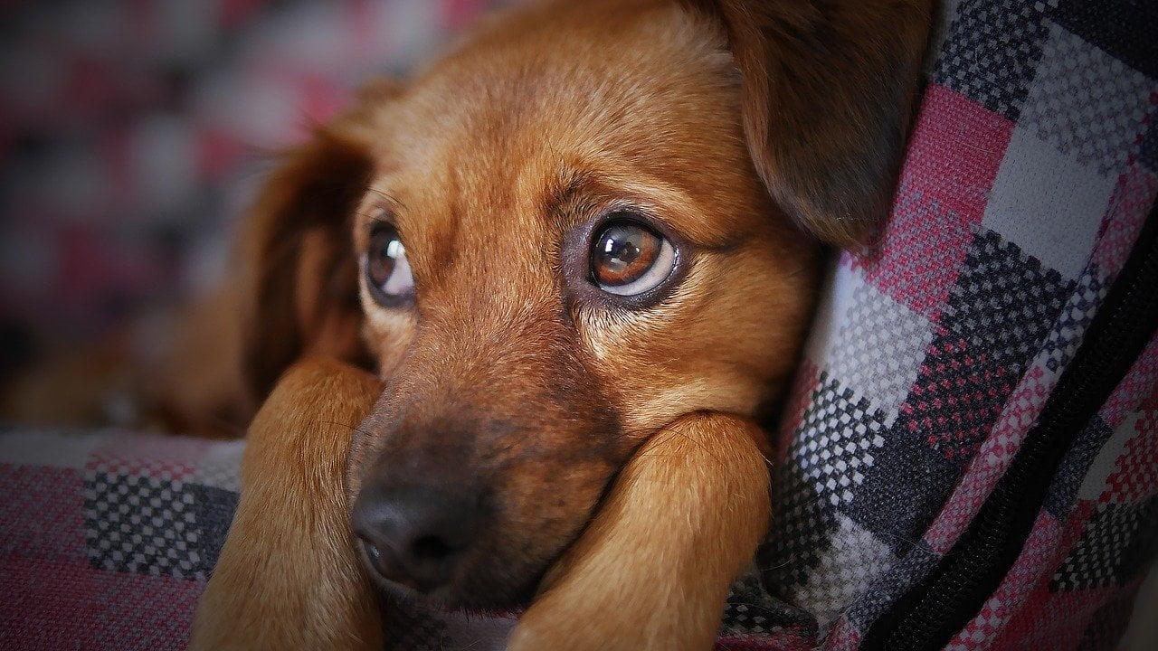 Sover din hund i sengen sammen med dig?