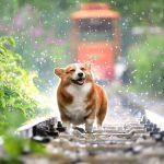 Få råd til mere hund i hverdagen