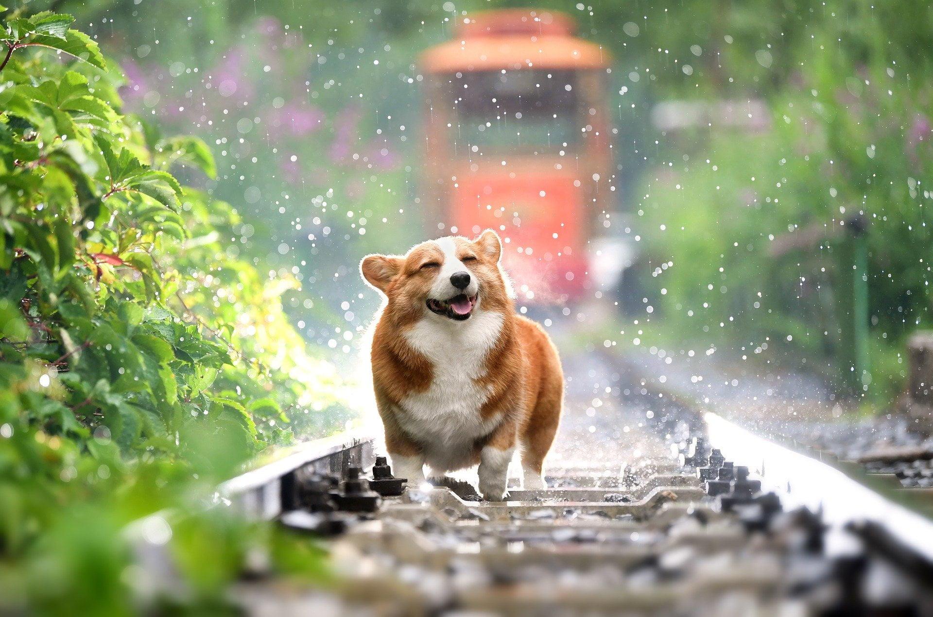 Leg og underholdning med din hund