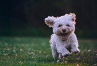 Nyudklækket hundeejer? Læs vores fem gode råd til, hvordan du forbereder dig på dit nye familiemedlem