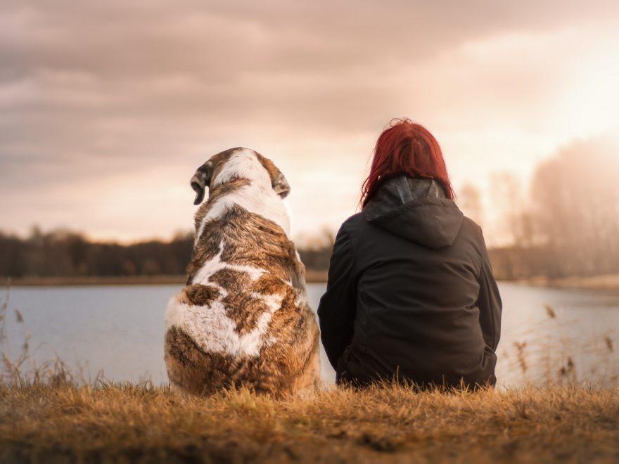 Mange hundeejere ligner deres hund - Ligner du din?