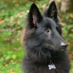 Hvad er et hundetegn?