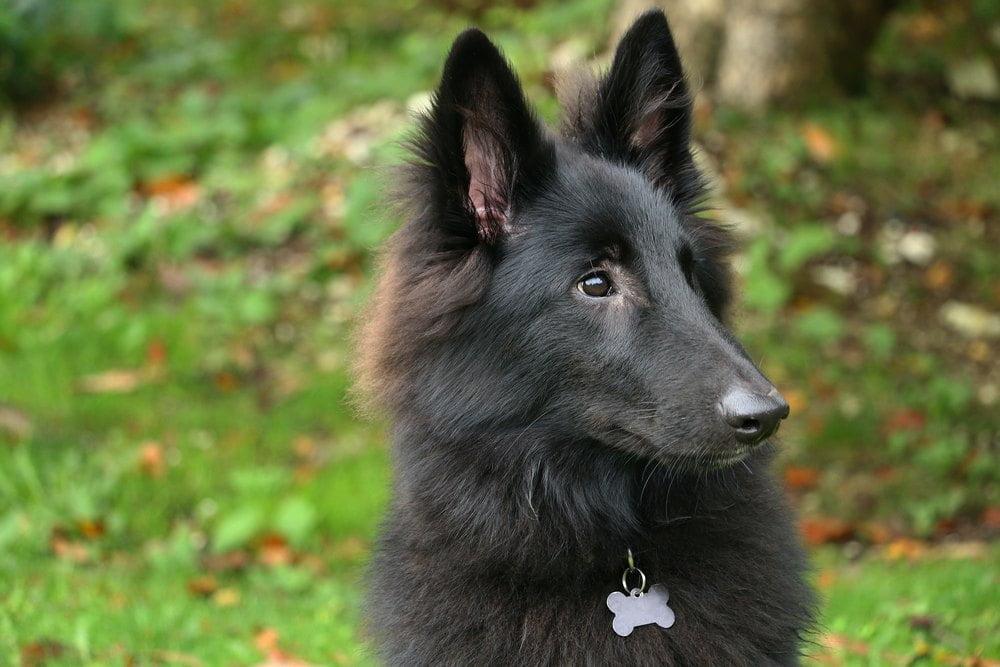 7 vilde og overraskende facts om hunde