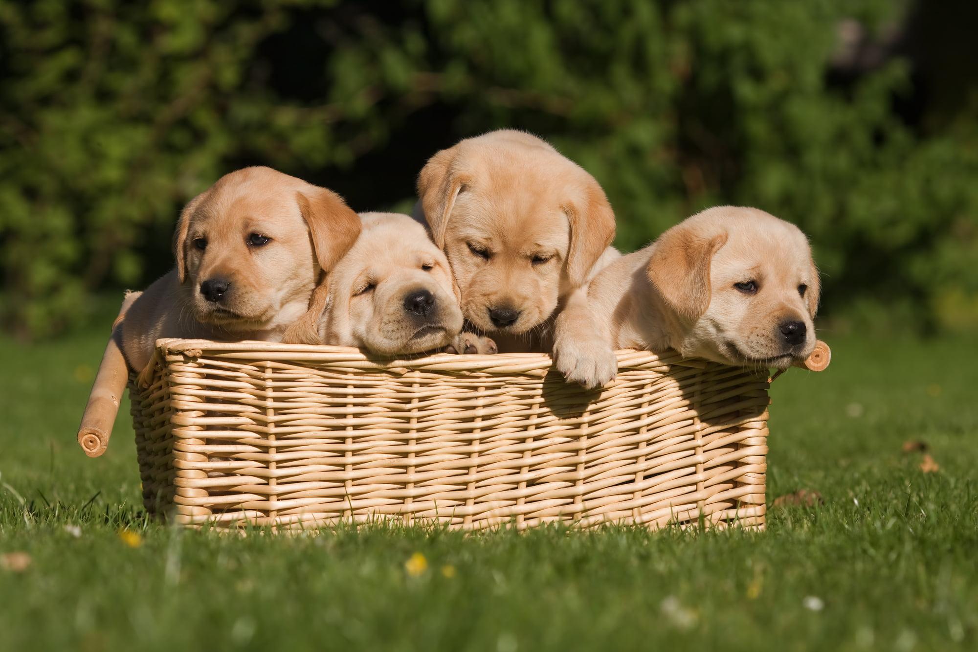 Køb af ny hundekurv